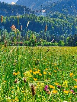 Castle, Kristin, Meadow, Wildflowers, Grass, Nature