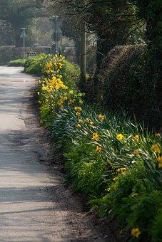 Daffodils, Flowers, Lane, Road, Street, Country, Bloom