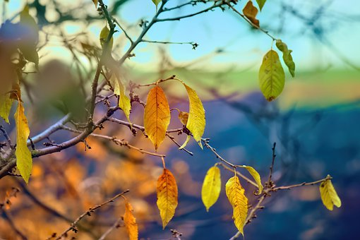 Autumn, Leaves, Branches, Autumn Leaves, Autumn Foliage