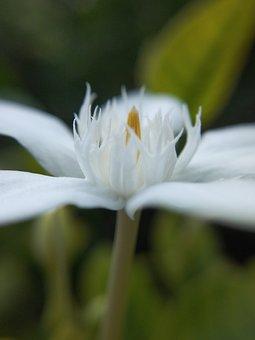 White, White Flower, Macro, Macro Photography, Petals