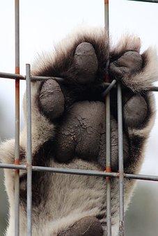 Tiger, Paw, Cat, Animal, Predator, Claw, Fur, Dangerous