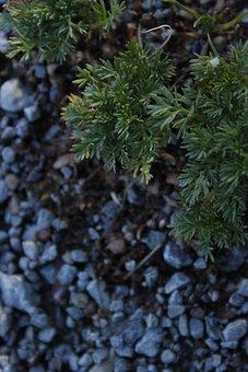 Leaves, Plant, Garden, Pebbles, Rocks, Outdoors, Nature
