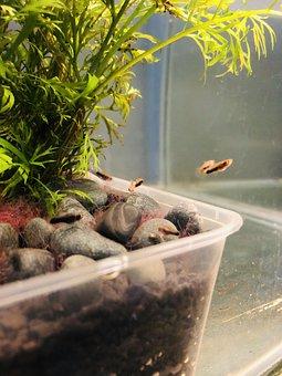 Fish, Koi, Fishtank, Plants, Rocks, Water, Animal