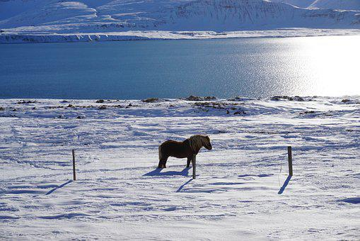 Horse, Winter, Snowy, Lake, Snow, Field, Snow Field