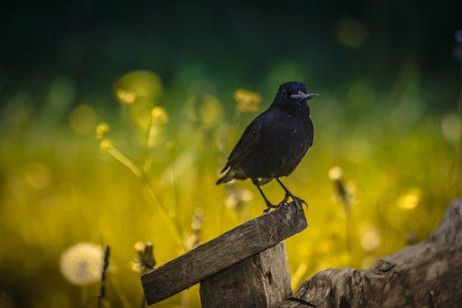 Bird, Nature, Spring, Feather, Springtime, Hummingbird