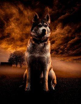 Dog, Clouds, Sky, Nature, Landscape, Sunset, Animal