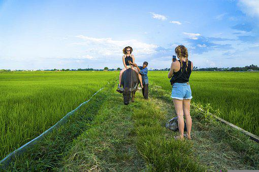 Tourists, Women, Buffalo, Ride, Riding, Taking Photo