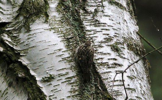 Tree, Bark, Log, Trunk, Birch, Branch, Bird
