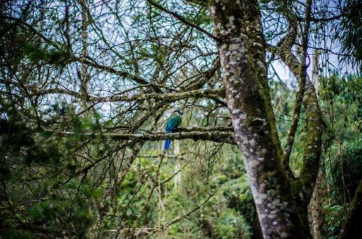 Amazonian Motmot, Bird, Tree, Perched, Animal, Wildlife