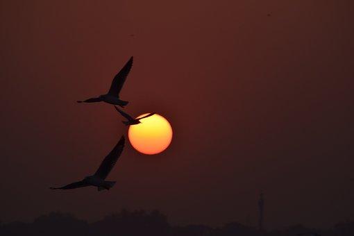 Sunset, Flying Birds, Sun, Freedom, Beach, Clouds, Dusk