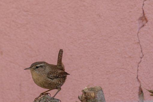 Small, Nature, Bird, Duck, Robin, Wildlife, Feather