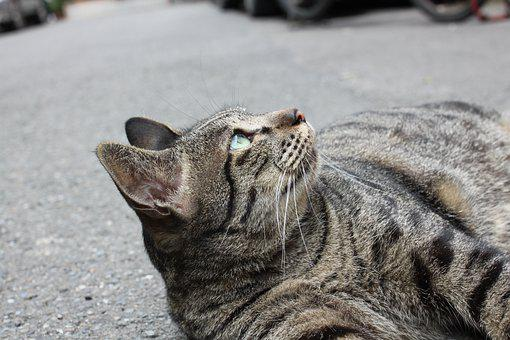 Cat, Watching, Sky