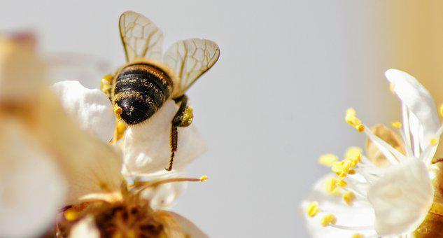 Blossom, Bloom, Insect, Bee, Close Up, Nature, Garden