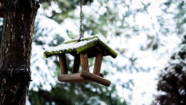 Feeder, Bird, Snow, Cold, Tree, Birdhouse, Nature