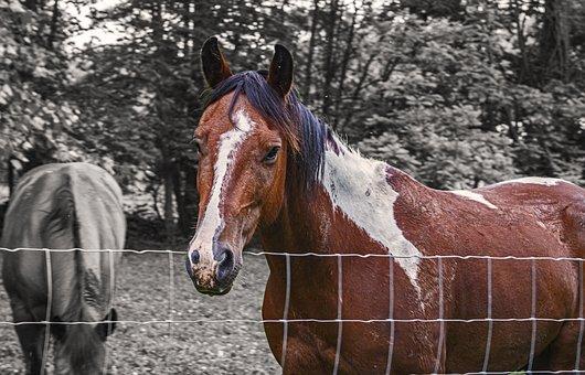 Horse, Farm, Equestrian, Ranch, Horses, Animal, Equine