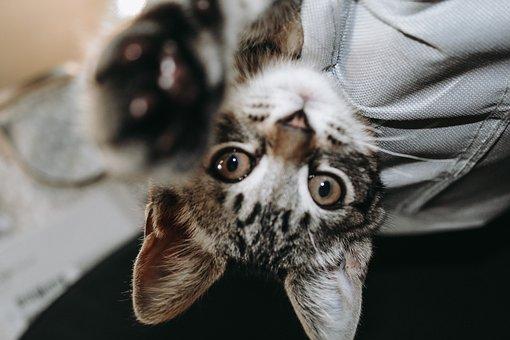 Kitten, Cute, Soft, Feline, Adorable