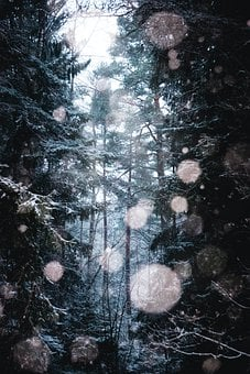 Pine Trees, Trees, Forest, Particles