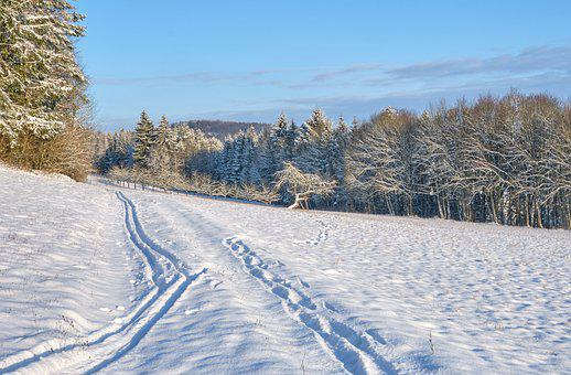 Winter, Snow, Landscape, Forest, Trees, Fruit Trees