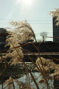 Reeds, Riverside, River, Lake, Bridge, Grass, Evening