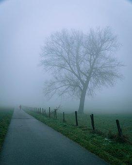 Tree, Fog, Lane, Nature, Landscape, Winter, Road