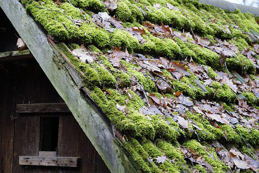 Roof, Moss, Old, House, Roofing, Barn, Green, Cottage