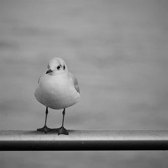 Seagull, Perched, Railing, Perched Bird