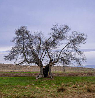 Tree, Branches, Autumn, Old Tree, Dying Tree, Grass