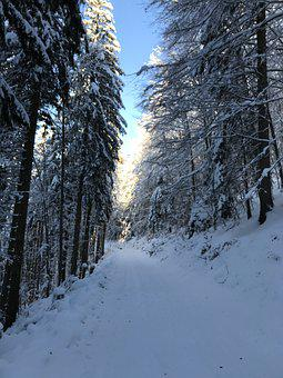 Winter, Forest, Wintry, Snow, Nature, Trees, Frost