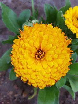 Flower, Green, And, Yellow
