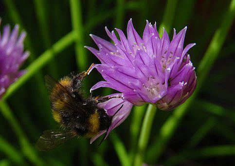 Flowers, Bees, Nature
