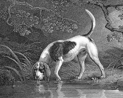 Southern Hound, Dog, Canine, Extinct, Old English Hound