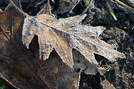 Sheet, Flora, Ripe, Ice, Winter, Freeze, Nature
