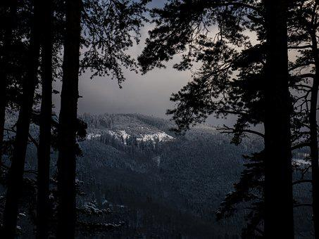 Snow, Vosges, Mountains, Trees, Shadows