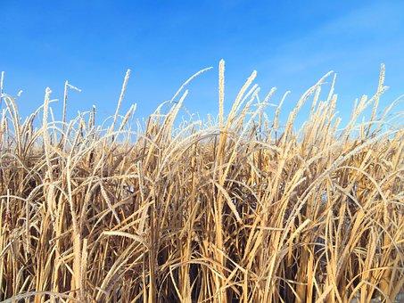 Prairie, Grass, Sky, Nature, Grassland