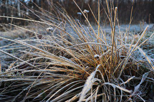 Grass, Plants, Ice, Frost, Snow, Icing, Winter, Rime