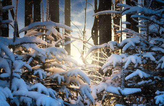 Trees, Forest, Snow, Ice, Frost, Snowflakes, Sunset