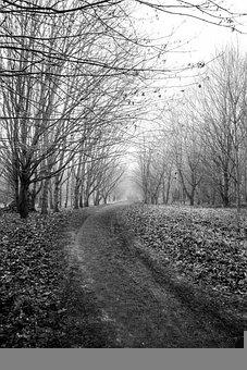 Dirt Road, Trees, Fog, Road, Path, Trail, Woods, Mist