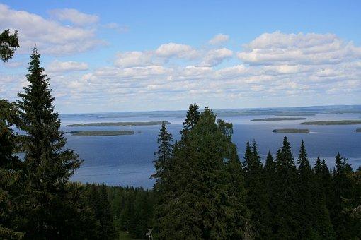 Finland, Mountain, Kolitunturi, Country Wide, Forest