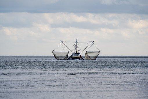 Fishing Boat, Nets, Sea, Boat, Shrimp, Crabs