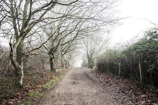 Dirt Road, Trees, Fog, Mist, Road, Path, Trail, Woods
