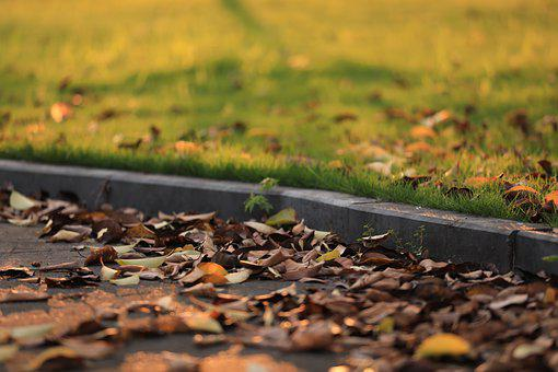 Fallen Leaves, Pavement, Lawn, Leaves, Dried Leaves