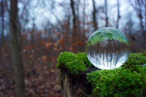 Glass Ball, Moss, Forest, Lensball, Crystal Ball, Trees