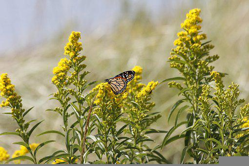 Butterfly, Insect, Flowers, Wings, Animal