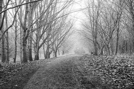 Dirt Road, Trees, Fog, Road, Path, Trail, Woods, Mud