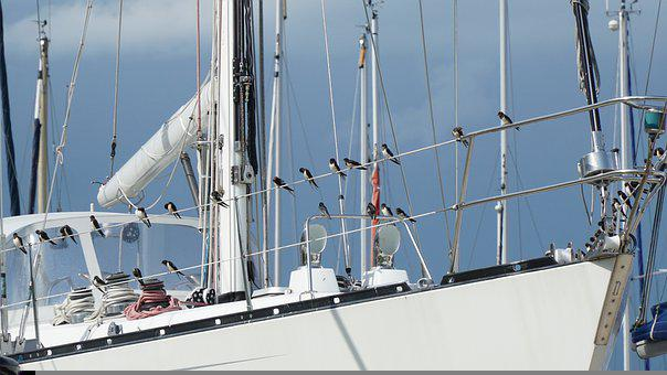 Birds, Boat, Ship, Sailboat, Nautical