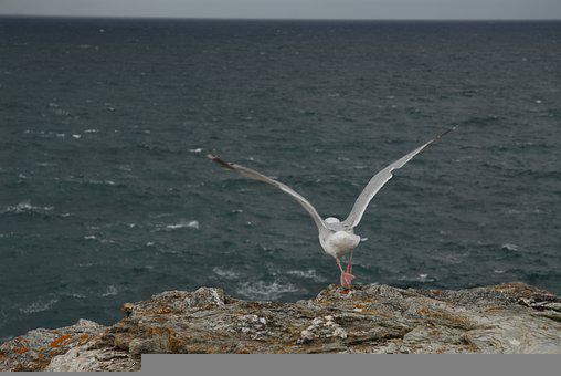 Seagull, France, Sea, Bird, Nature, Freedom, Sky, Coast