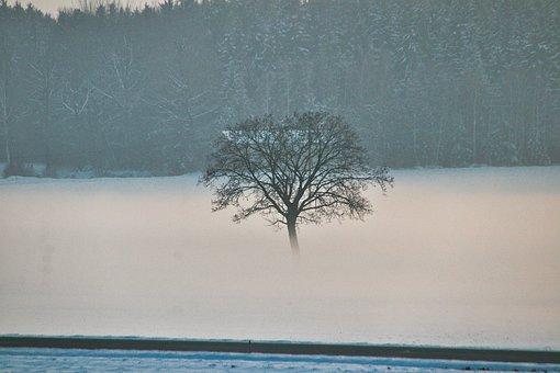Road, Tree, Snow, Fog, Foggy, Mysterious, Mystical