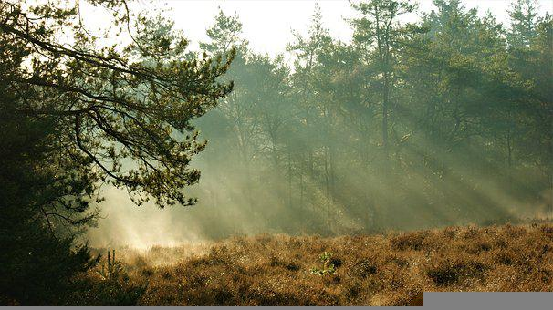 Trees, Forest, Fog, Sunlight, Sun Rays, Mist, Morning