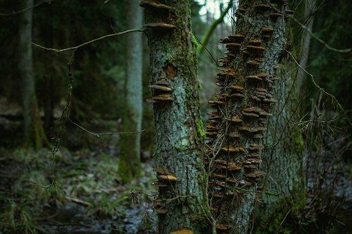 Mushrooms, Trees, Forest, Fungi, Toadstools, Moss