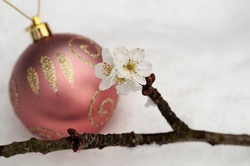 Barborka, Flowering Cherry, Twig, Christmas Balls
